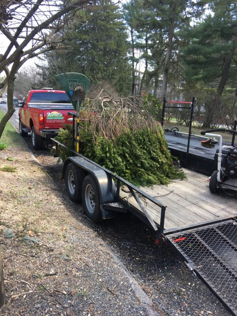 Truck with Newly Cut Trees